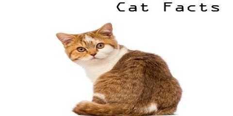 Fakta tentang kucing yang belum kita ketahui. Hal unik dan aneh mengenai hewan kucing http://www.kucinglovers.com/fakta-tentang-kucing/ #kucing #kucinglovers #pecintakucing #hewanpeliharaan #binatangpeliharaan #cat #catlovers #animal #faktakucing #faktaunikkucing #faktaanehkucing #faktatentangkucing