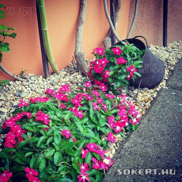#garden #kert