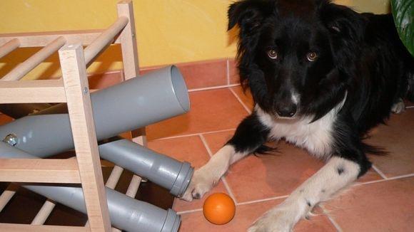 Leckerchen und Ballspender für Hunde zum Nachbauen
