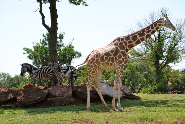 17 Best Images About Oklahoma Field Trips On Pinterest: garden city zoo