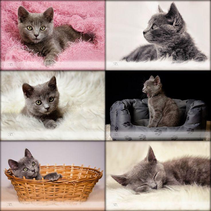 podoben réka photo: Variációk egy cicára
