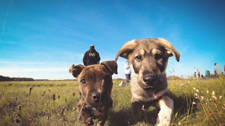 Petition · Ajuntament de Cubelles: ¡Salvemos la Protectora de animales del Garraf! · Change.org