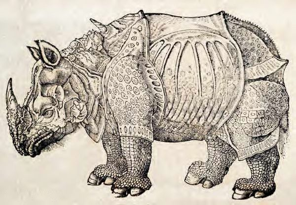 "woodcut illustration prints | Rhinoceros woodcut image from the book, ""The History of the Four ..."