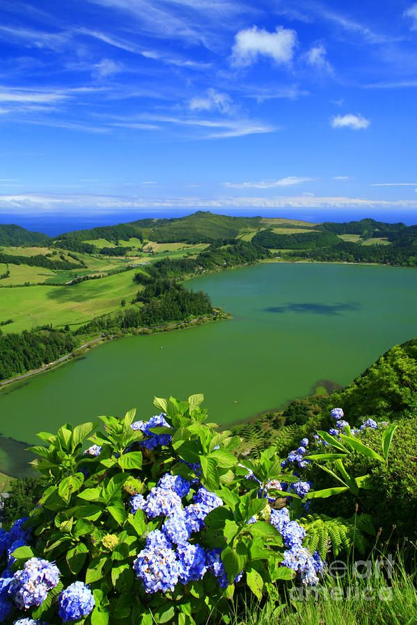Que increíble es el planeta tierra. Cada día me sorprende mucho mas #lago #verano #portugal Furnas Lake with hydrangeas on the foreground. Sao Miguel island, Azores islands, Portugal