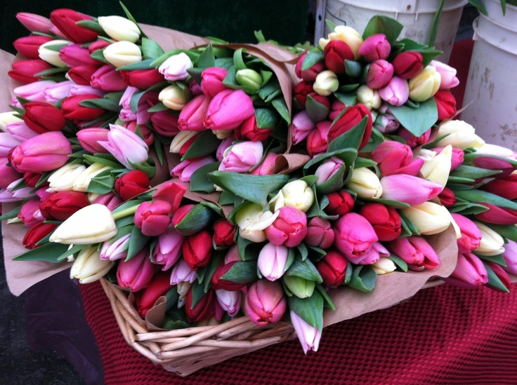 Tulips from Alm Hill Gardens @West Seattle Farmers Market