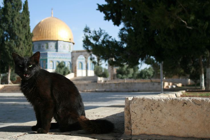 https://flic.kr/p/8chPqL | Moschea di Omar | Gerusalemme (Israele), Spianata delle Moschee (Har HaMoriyah), 06/06/10 h 07:47