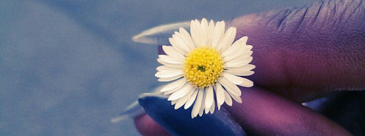 Fiore Margherita