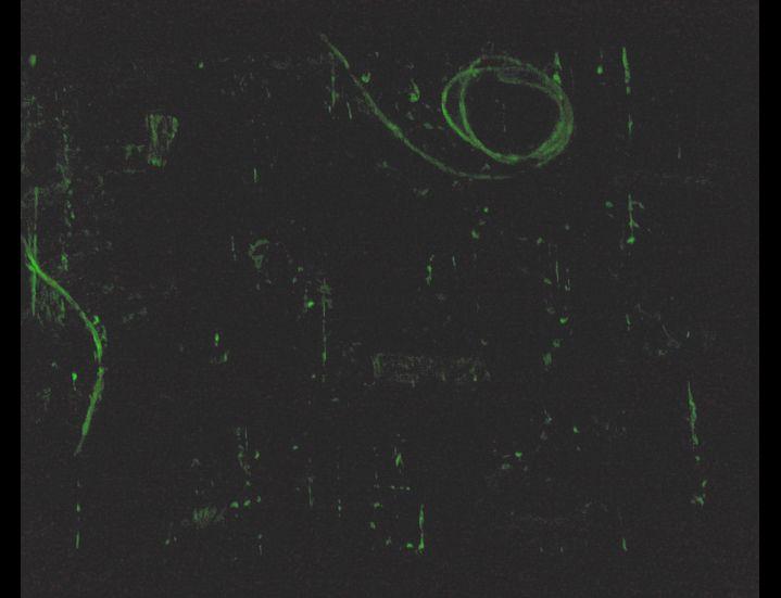 """Faire l'chaos (dark) 2007 12"""" x 8"""" Acrylique, os, colle, corde, découpures, médium phosphorescent et éléphant métallique sur toile Acrylic, bones, glue, rope, clippings, glow-in-the-dark medium and metallic elephant on canvas"""