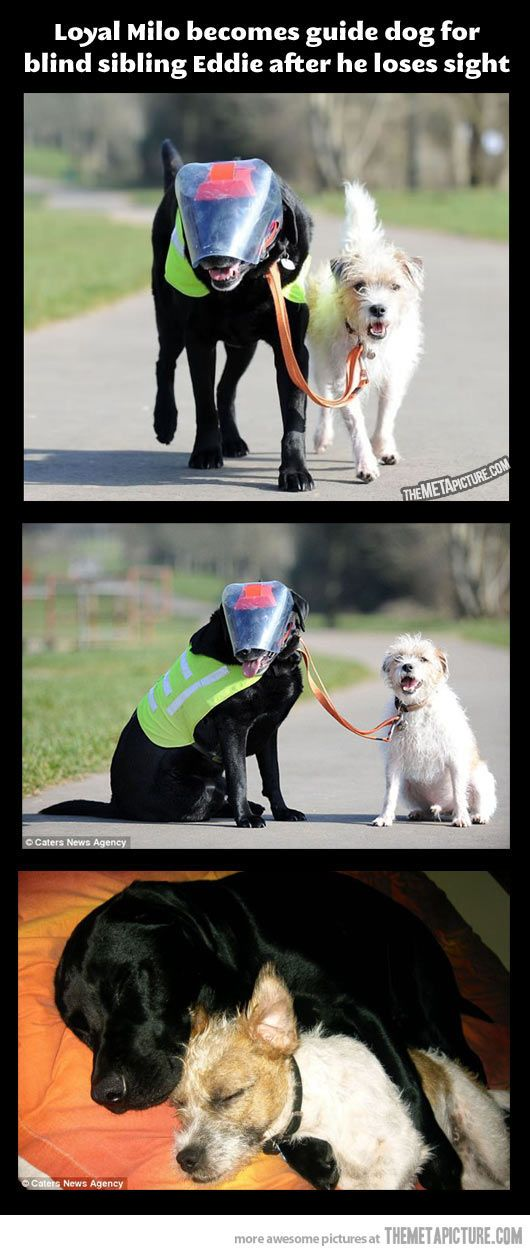 Blind dog with his own guide dog…