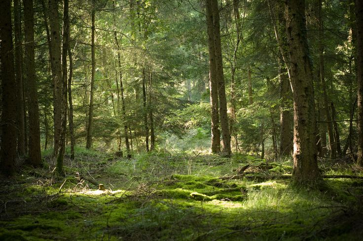 algy3289.co.uk wp-content uploads 2013 10 Forest-of-Dean.jpg