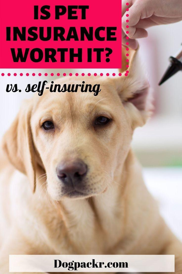 The Best Lifetime Dog Insurance Pet Insurance Reviews Dog Insurance Pet Health Care