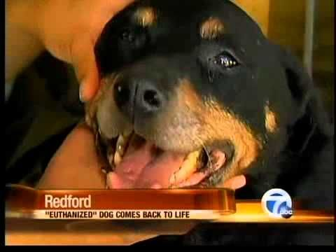 Dog Put to Sleep, Then Wakes Up -- Animal Euthanasia Gone Wrong. Wow what an emotional situation !