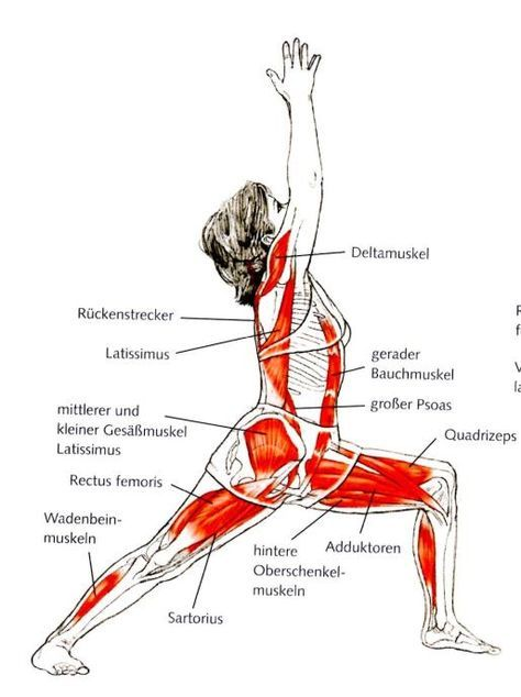 Hüftbeuger Muskel