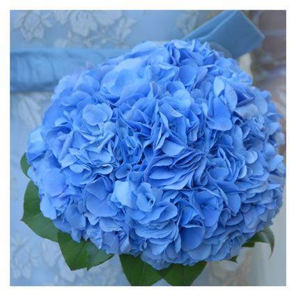 bouquet ortensia blu
