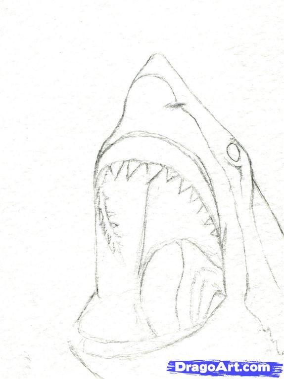 how to draw a shark head step 4