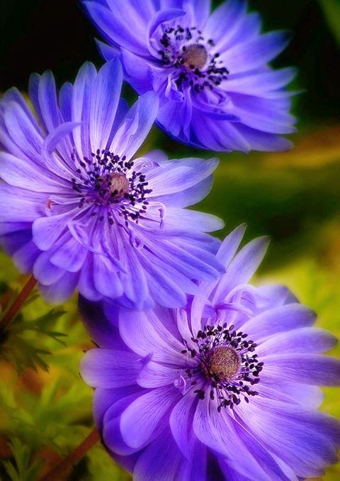 Looks like a Stokes Aster :)
