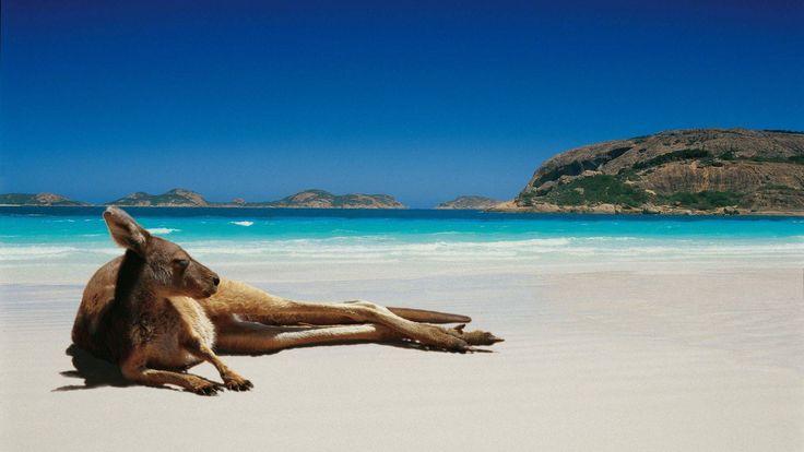 hd pics photos stunning attractive kangaroo 10 hd desktop background wallpaper