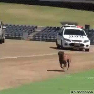 This dog is a savage | Gif Finder – Find and Share funny animated gifs