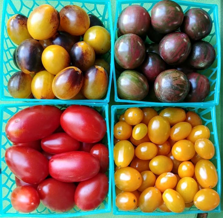 #Tomatoes come in a variety of different colors... red, yellow, orange, pink, green, burgundy, purple, streaked, striped, and practically black! Each color comes with its own unique flavor pallet and nutritional value. 🍅 #FoodFacts #BuyLocal #EatLocal #MoreFruits #CleanEating #NYCP #greenmarket