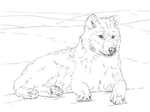 polarvarg