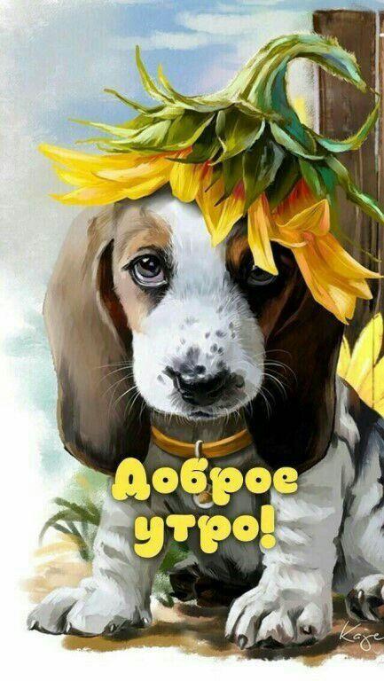 Красивые добрые открытки с добрым утром с животными