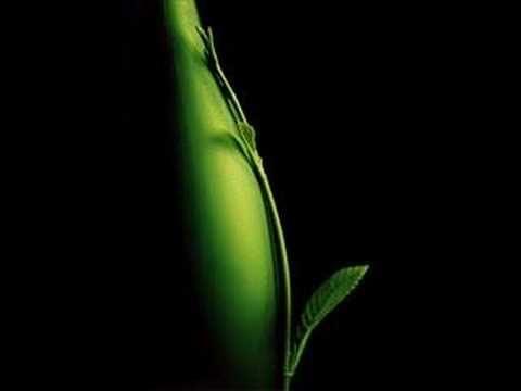 Book of Love-Peter Gabriel