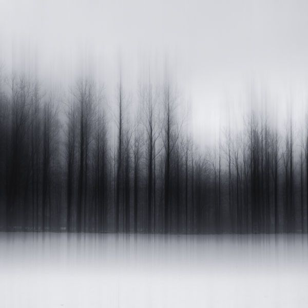 Blurry Forest Photography - Jürgen Heckel Dims the Forest Background to Create Eerie Shots (GALLERY)