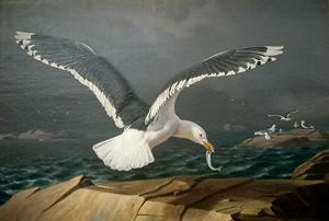 """""""A Flying Seagull"""" 1859 - """"Lentävä Merilokki"""" - Ferdinand von Wright (1822-1906) - Photo National Board of Antiquities. (Finland) - Vaikka Ferdinand von Wright luonnonaiheineen liittyykin suoraan veljiensä taiteeseen,hänen kuvansa ovat täynnä toisenl.tunnelmaa.Ferdinandia kiinnosti luonnossa,tarkan kuvaamisen lisäksi,sen armottomuus,taistelu heikkojen ja vahvojen välillä.Kerta toisensa jälk.hän kuvasi saalistaan raatelev.petolintuja uljaissa maisemissa täynnä voimaa ja suurta draamaa."""