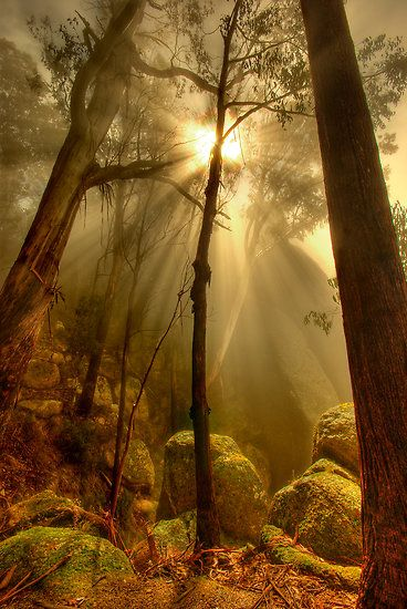 ~~Afternoon mist, Mount Buffalo ~ Victoria, Australia by Kevin McGennan~~