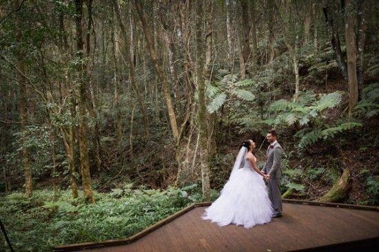 O'Reillys Rainforest Retreat – Hidden Gully