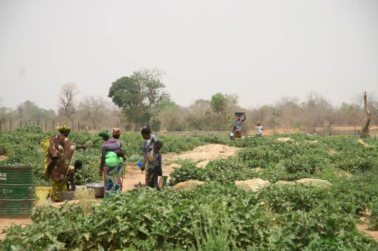 How one Malian town is fighting hunger