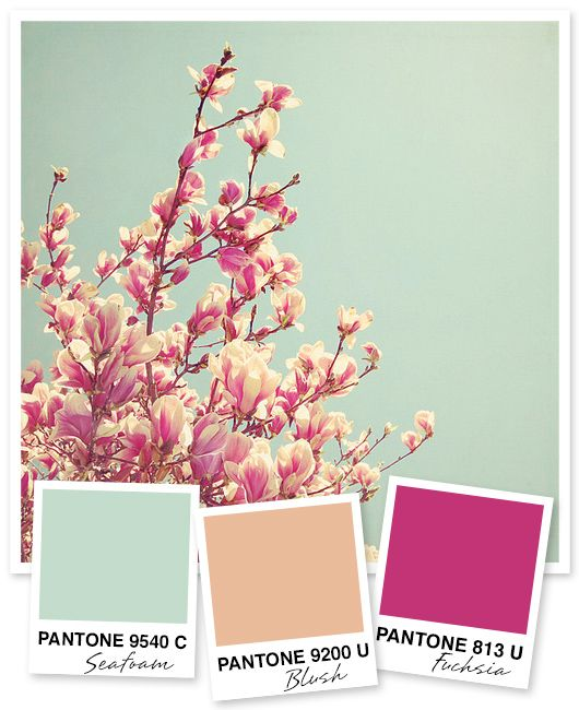 Mint Peach and Fuchsia Color Palette: might work in kitchen with antique wallpaper
