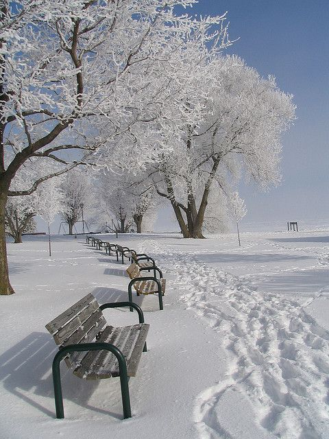 Bench on a snowy day
