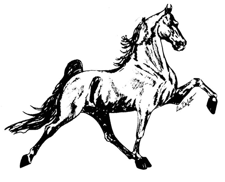Walking Horse Outline: 31 Best Bling Templates For Shirts And Tack Images On
