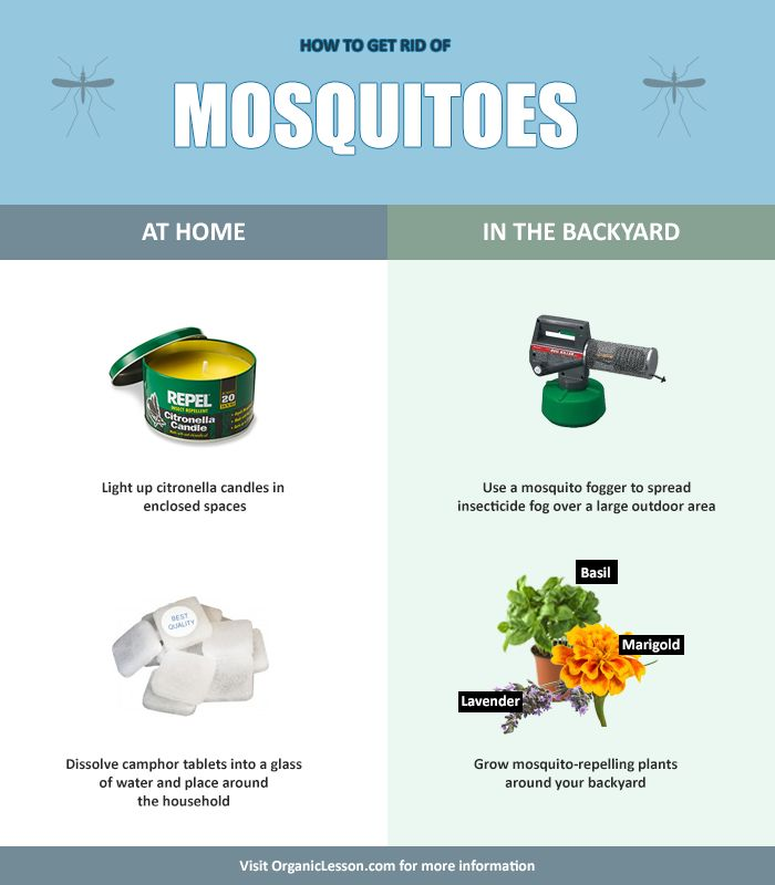 get rid mosquitoes backyard