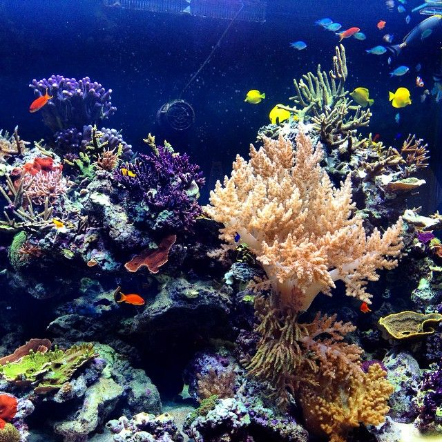 Nat Diaz  @natdiaz39 #CoralReefs - sec...Instagram photo | Websta (Webstagram)