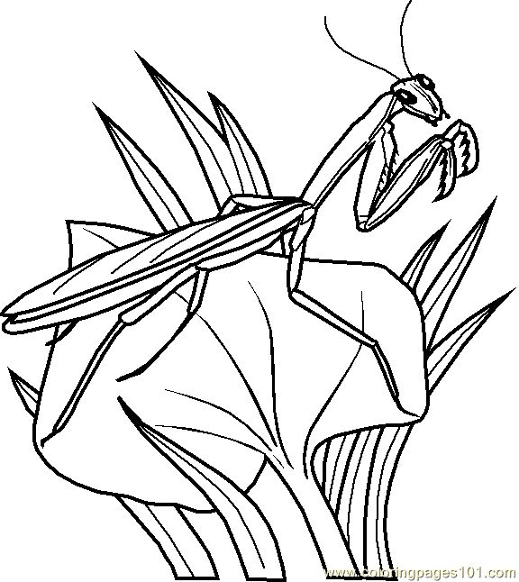 Grasshopper Coloring Page 0002 1