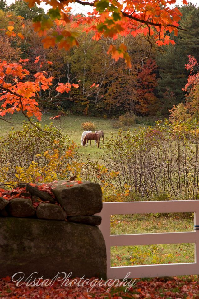 Folger-Horse-in-paddock-fall-foliage. Who won't want to live there. Absolutely beautiful.