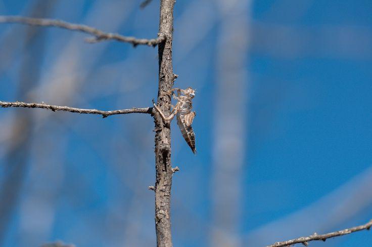 exuvia di libellula by Graziella Serra Art & Photo on 500px
