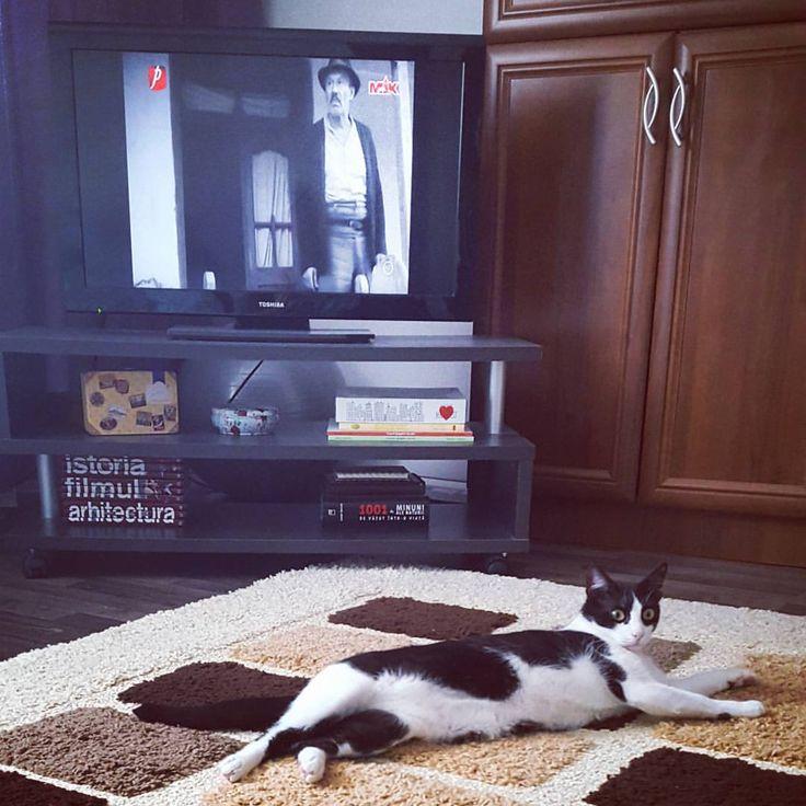 Alecu: A tăiat salcâmul! 🌳#morning #movie #morometii #saterdaymorning #cat #Alecu #instacat #catofinstagram #blackandwhite #brasov #ig_brasov
