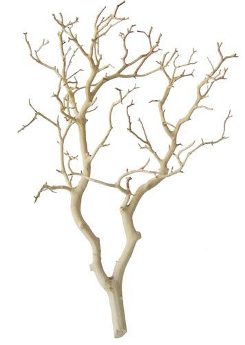 Sandblasted Manzanita Centerpiece Branches, 18 inches : Blooms and Branches - Decorative branches and manzanita!