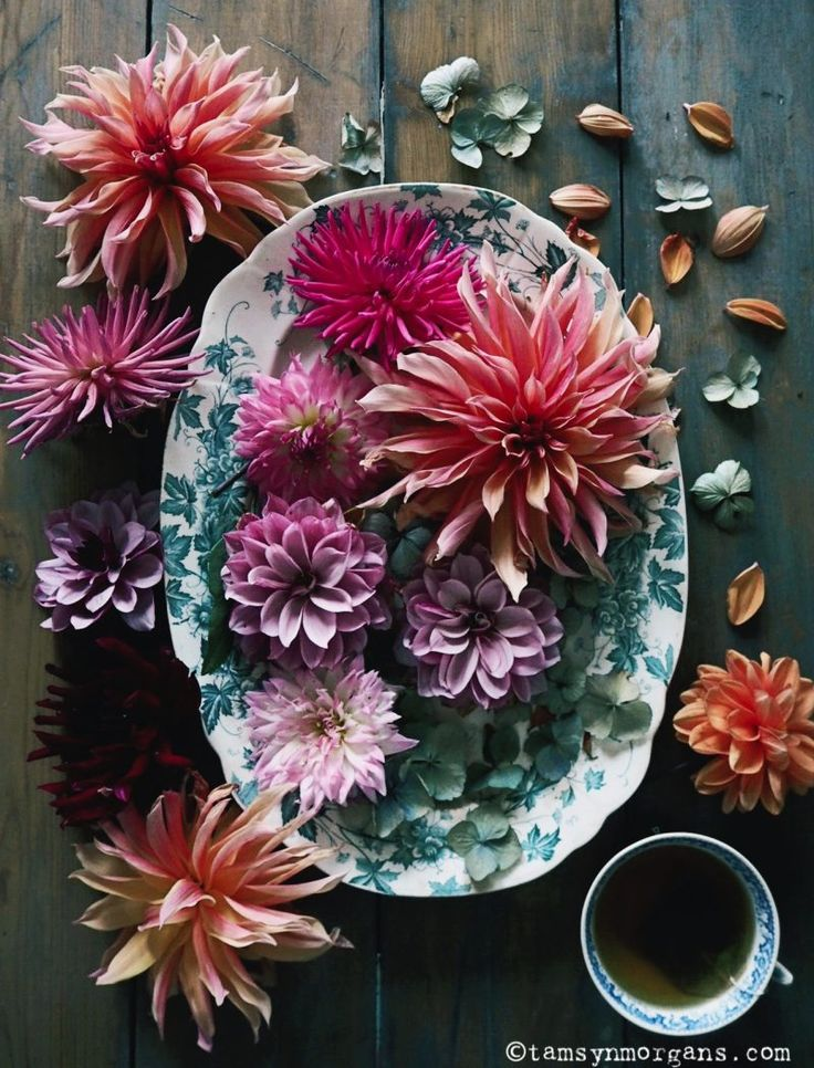 Flatlay photography/Floral photography/Dahlia Labyrinth from my allotment and vintage china