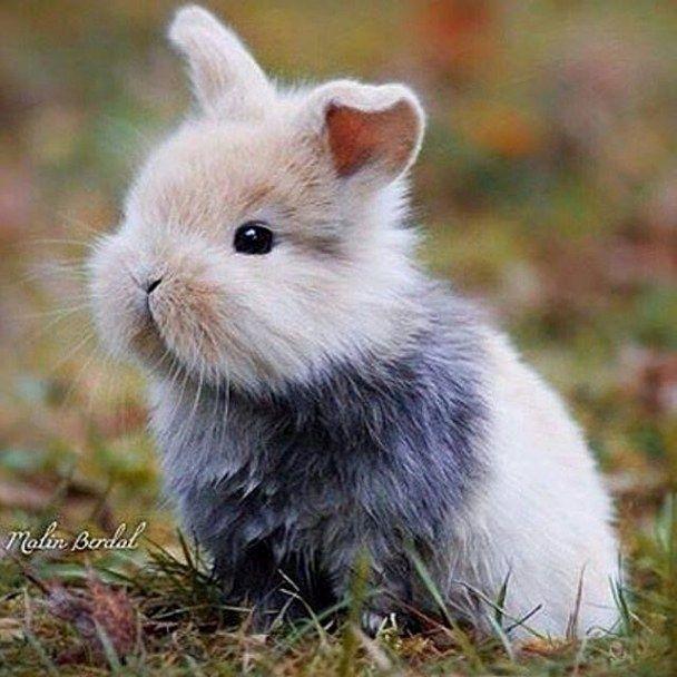 футарк картинки с пушистыми кроликами маленькие насекомые коричневого