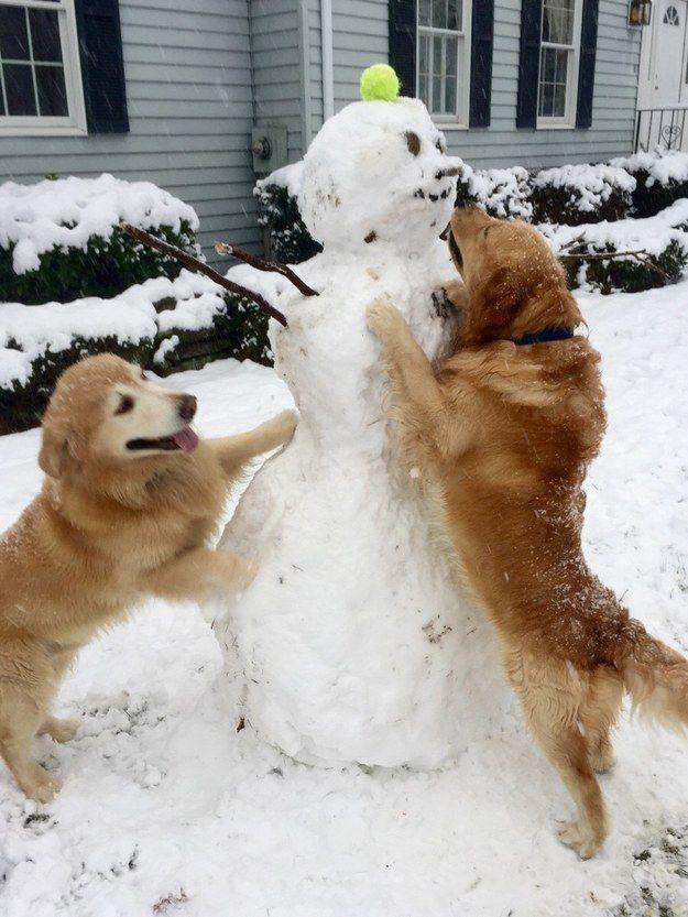 These expert snowmen builders. | 38 Dogs Who Won 2014 http://interestingbags.blogspot.com/ 3d animals