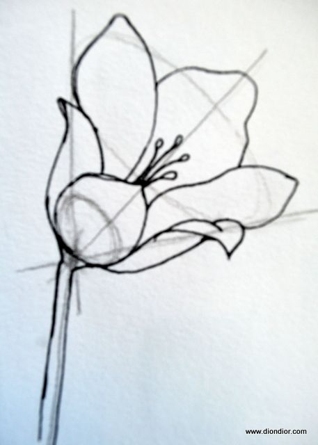 Dion Dior: Tutorial: Drawing Bowl-Shaped Flowers