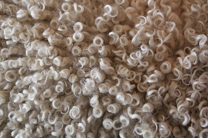 Beautiful Sheep Wool from The Sheep & Wool Festival. See more @ http://omgheart.com