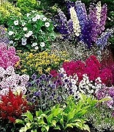 Epic Buntes Staudenbeet Multi Colour Top Pflanzen online kaufen BALDUR Garten