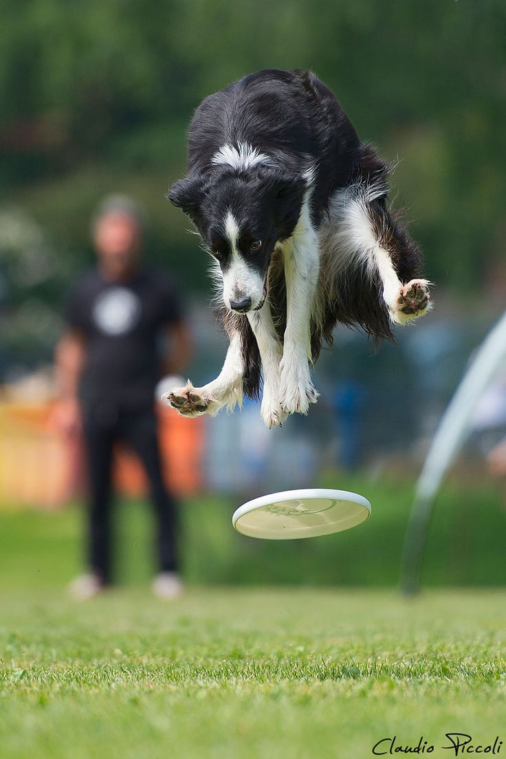 Funny Dogs Flying, Taking by Claudio Piccoli (20+ Pics) | Kfullmoon