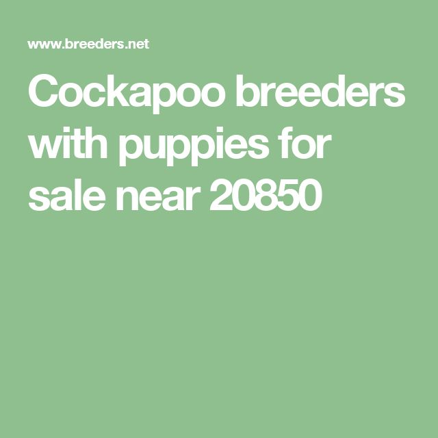 Cockapoo  breeders with puppies for sale near 20850