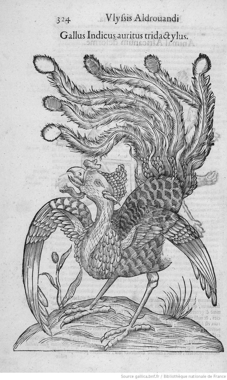 [Fig. p.324 : dindon.] Gallus Indicus auritus tridactylus.  [Illustrations de Ulyssis Aldovandi Monstrorum historia] / Jean-Baptiste Coriolan, grav. ; Ulisse Aldrovandi, aut. du texte, 1642
